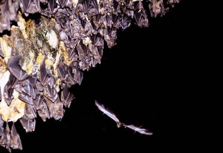 Goa Lawah Bat Cave