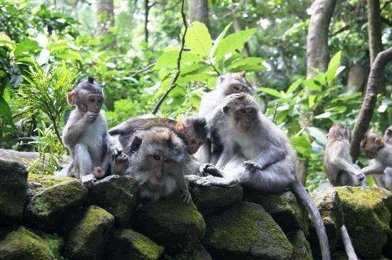 Monkeys-in-ubud