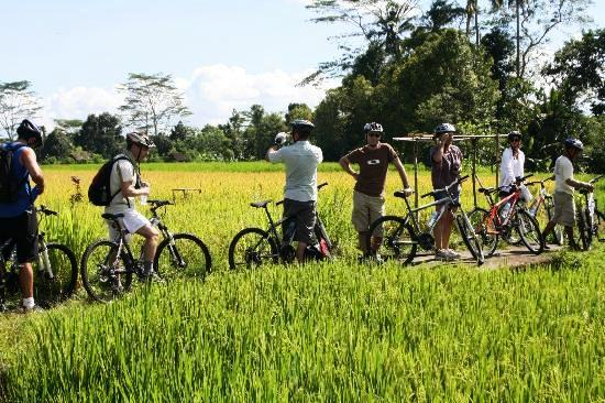 Rice-paddy-cyling-tour