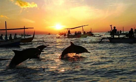 Sunrise-trip-for-dolphin